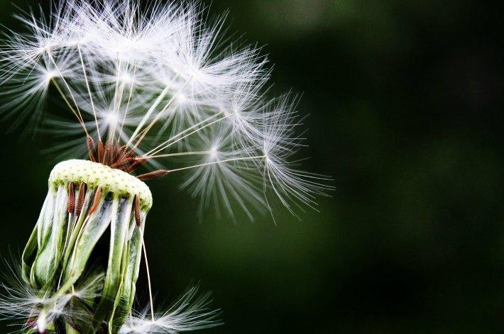 3 Florist Health Issues Allergy