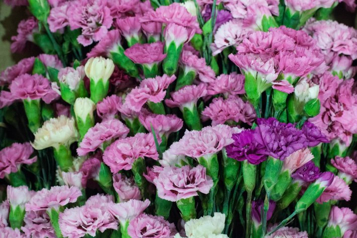 The best things about british flowers according to events florists rona wheeldon mightylinksfo Choice Image